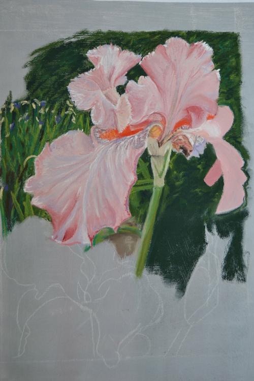 iris-rose-1