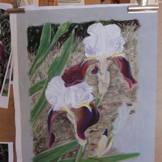 iris-blans-violets-derniere-etape-petit