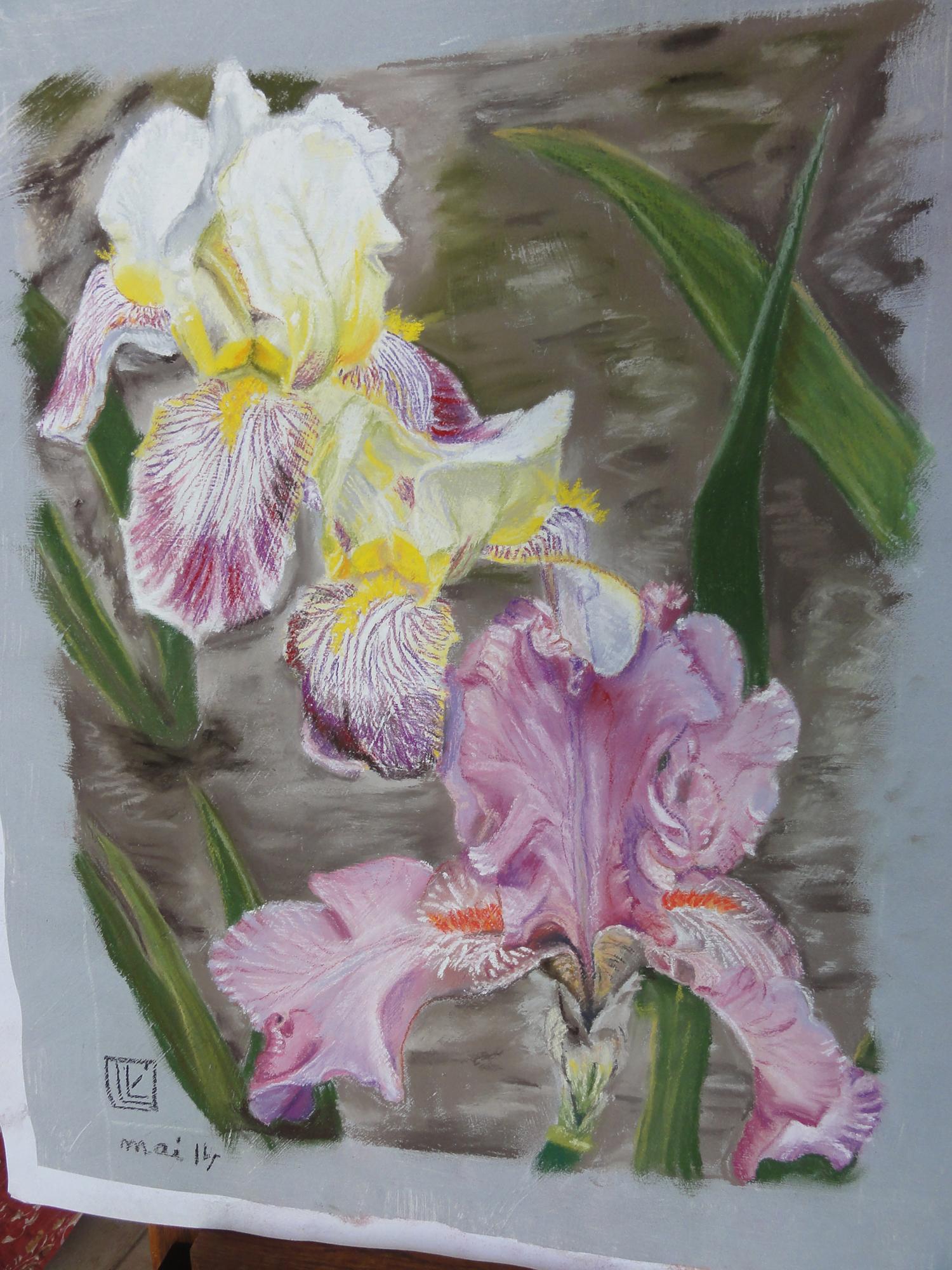 iris-jaunes-bicolores-copie
