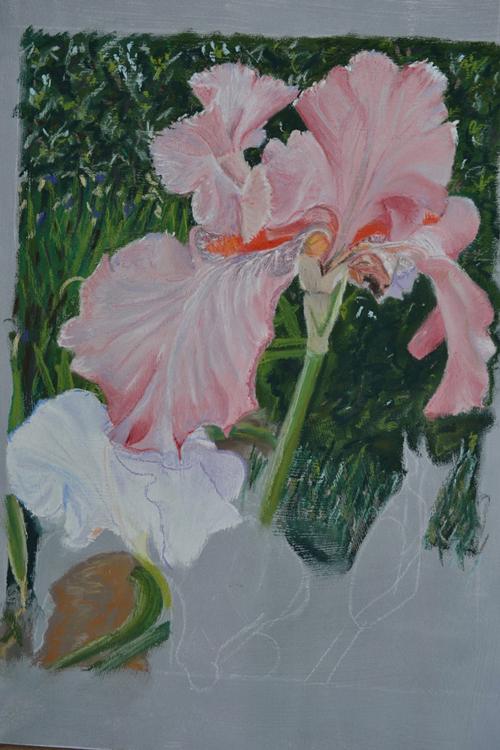 iris-rose-2