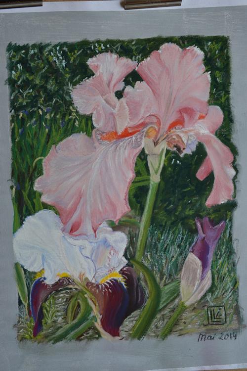 iris-rose-3 (1)